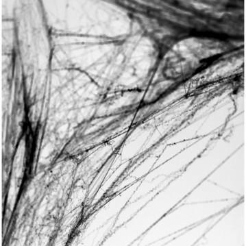 Spindelvæv Sort m/edderkopper